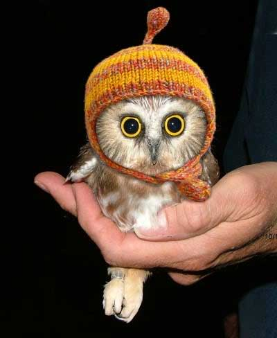 a hand holding a small owl - the owl is wearing a hat