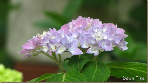 dells garden_016