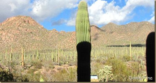 Desert museum_522