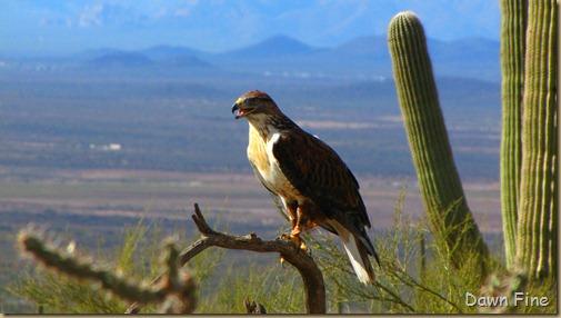 Desert museum_185
