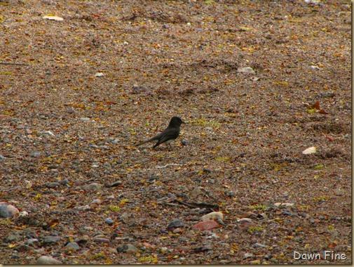 cienaga birding with Kathie_036