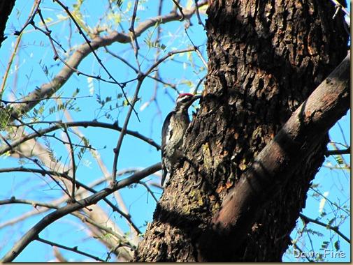 bird walk catalina state park_009