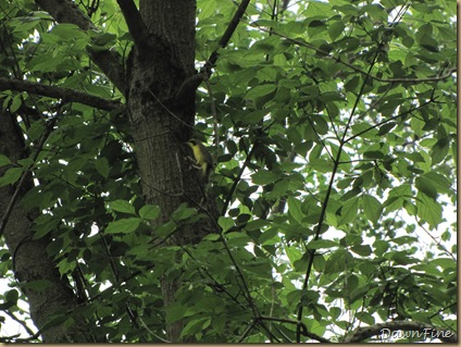 White Clay creek state park, de Jeff Gordong_20090516_007