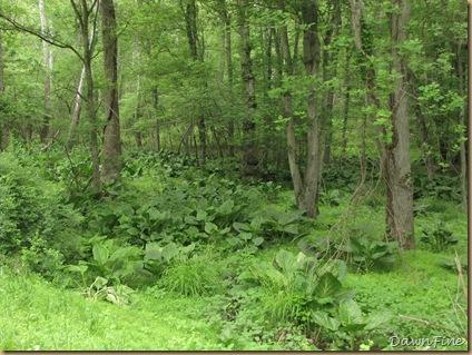 White Clay creek state park, de Jeff Gordong_20090516_017