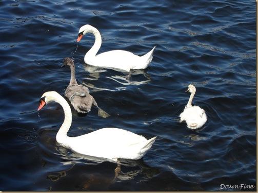 Swans_20090712_003