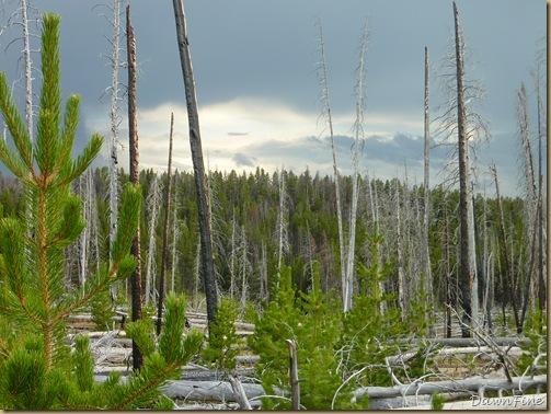 Yellowstone dawns_20090906_058