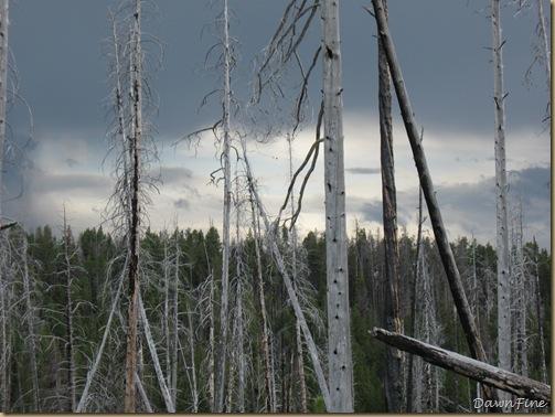 Yellowstone Jeffs pics_20090906_064