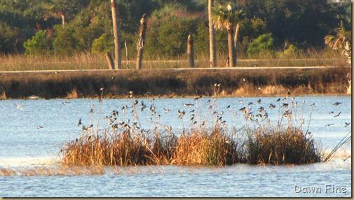Viera wetlands_012