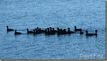 Viera wetlands_093