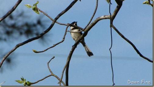 yard birding_035