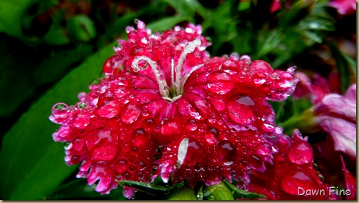 Water droplets and flowers_043