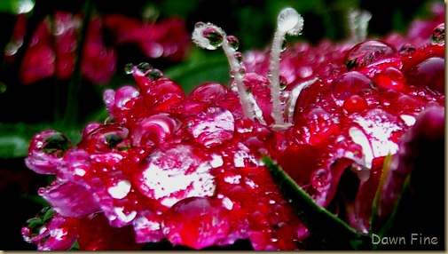 Water droplets and flowers_041