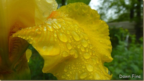 Water droplets and flowers_090