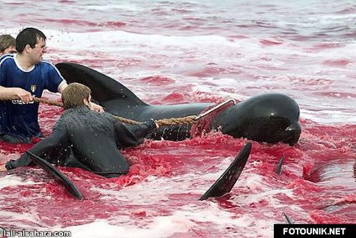 Perayaan paling Brutal & Berdarah di Dunia http://fotounik.net