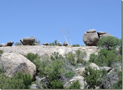 15 Old Century Plant stalks reach for the sky above the boulders Weaver Mts Yarnell AZ (800x600)