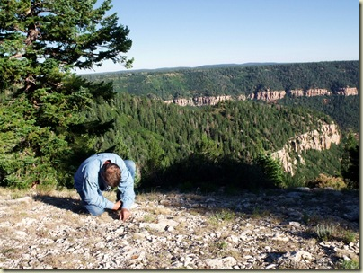 Mike fossil hunting at Marble View Forest Road 219 Kaibab National Forest Arizona