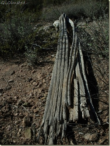 06 Saguaro spines BLM desert off Vulture Mine Rd Wickenburg AZ (768x1024)