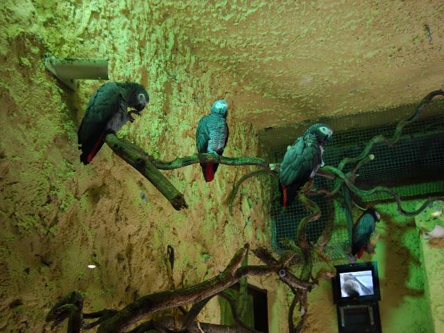 Ile papug widzisz na załączonym obrazku?