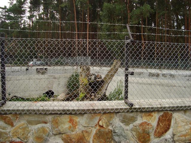 Zabezpieczenie wybiegu niedźwiedzia himalajskiego