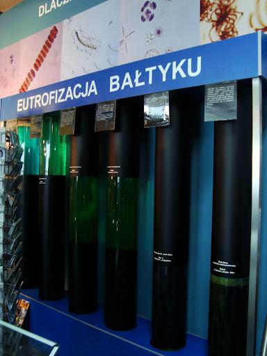 Na czym polega eutrofizacja Bałtyku?