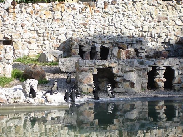 Basen pingwinów