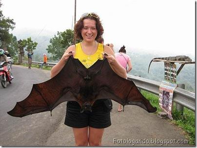 morcego gigante 1