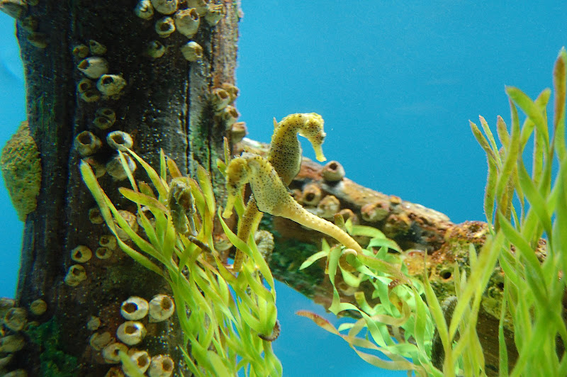 Oh, how cute are these seahorses?!