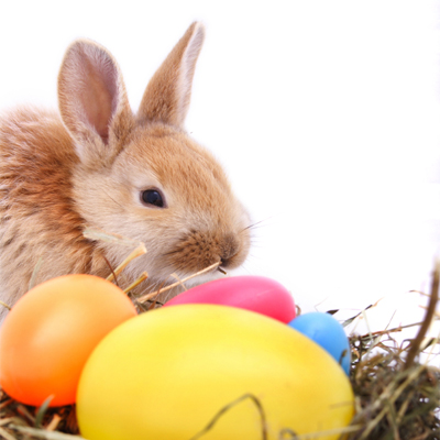 easter-bunny-400x400.jpg