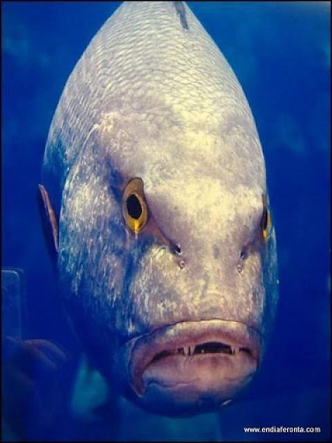 fish-faces09.jpg