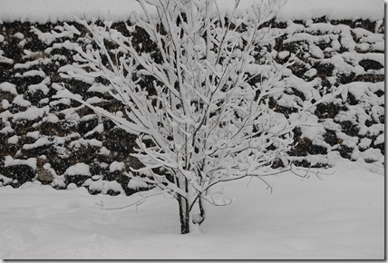 Snow 166