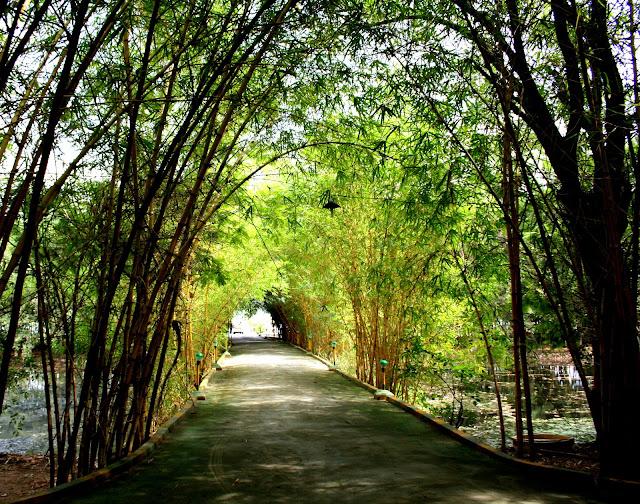 The way through the Resort