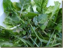 green salad_1_1