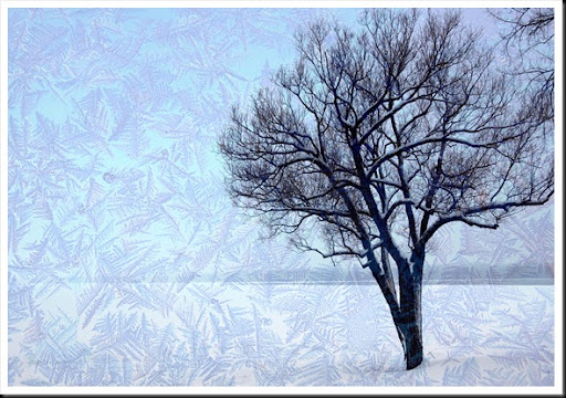 TREE River Frost