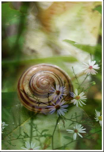 SNAIL and Daisies