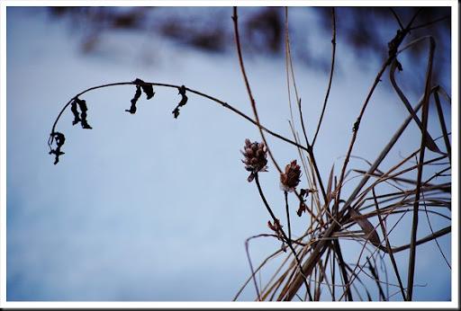 Branch silhouette 3