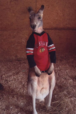 kangaroo blackhawks fan
