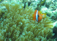 cahayagan reef, carmen, agusan del norte