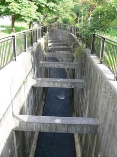 下流の橋より下流を望む