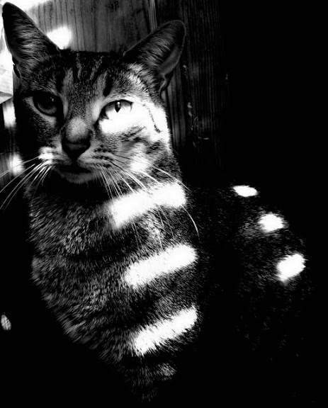 cat named fred, black and white