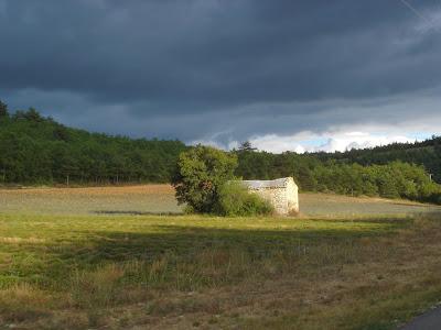 champs de lavande, après la récolte