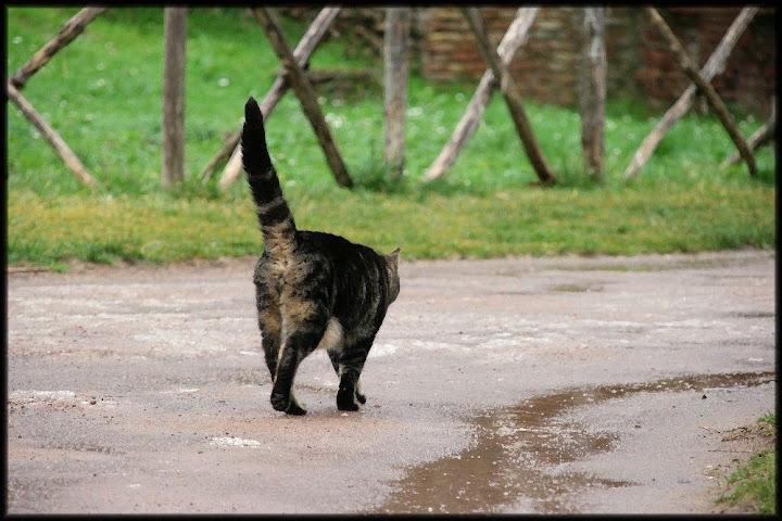 Resultado de imagen de gato marchandose