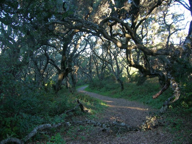Nice oak forest