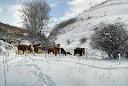Paisaje nevado gordonés (León).-Fotografía de Alfredo García