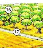 16. huerto 17. árbol frutal