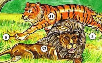 31. tigre a. pata 32. León a. melena
