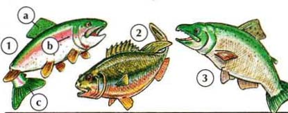 1. trout a. fin b. gill c. tail 2. bass 3. salmon