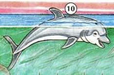 10. dolphin