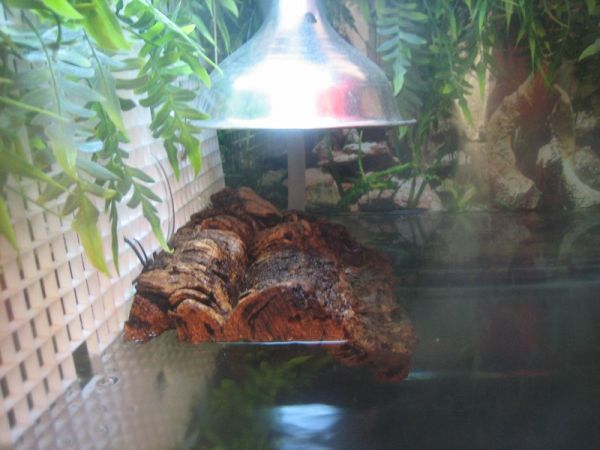pet turtle basking platform made of corkbark