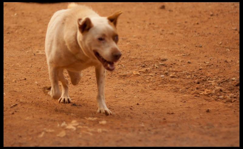 Running on 3 legs