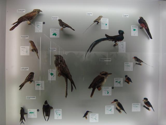 Muzeum Przyrodnicze we Wrocławiu - Ptaki